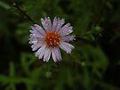 Blütenblätter nach Regen von Themis