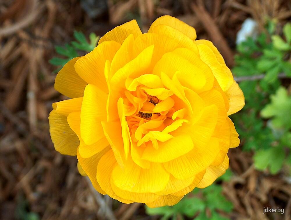 Yellow/Orange Flower by jdkerby