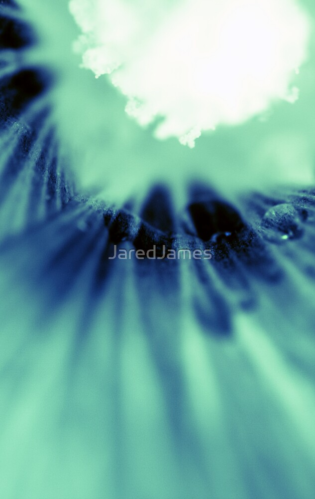 zomer  by JaredJames