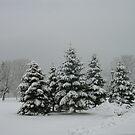 Dressed for Winter by artgoddess