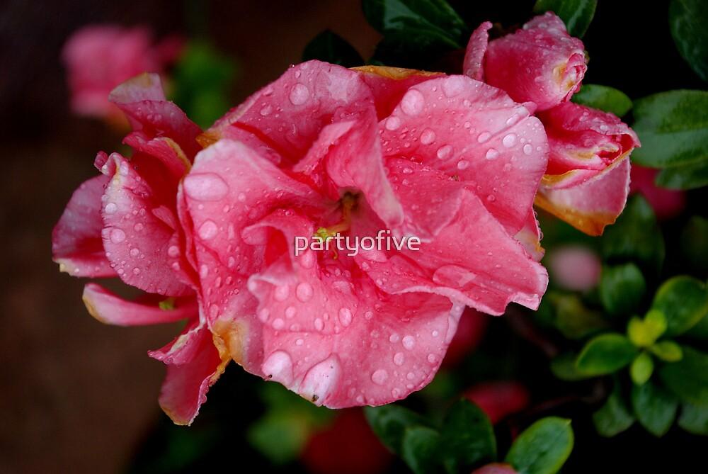 rain blossom by partyofive
