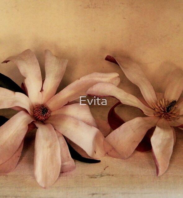 Magnolias In A Box - Still Life by Evita