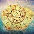 The Shell - Fibonacci (The Golden Spiral) in Nature by Denis Marsili