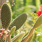 Bunny Ears cactus - Opuntia microdasys by Hedgie's Nature & Gardening Journal
