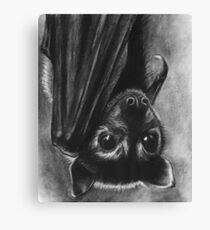 Baby Bat Canvas Print