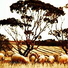 Sheep by Craig Shillington