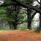 Panorama Point Kurrajong Heights by Bev Woodman