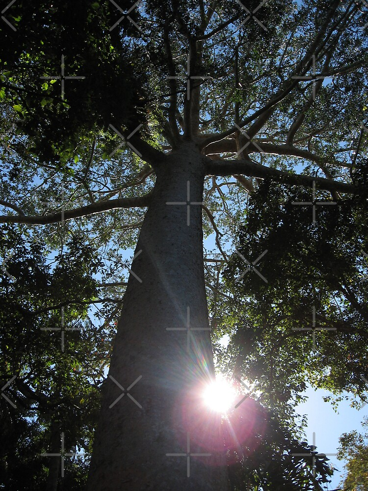 Rainforest Canopy by Kymbo