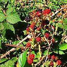 Wild Blackberries by Margaret Stevens
