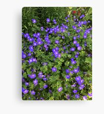 Violets of Ireland  Canvas Print