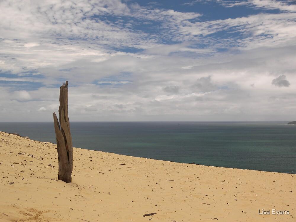 Sand Blow by Lisa Evans