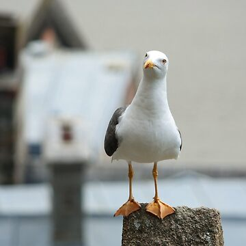 The Seagull by zuluspice