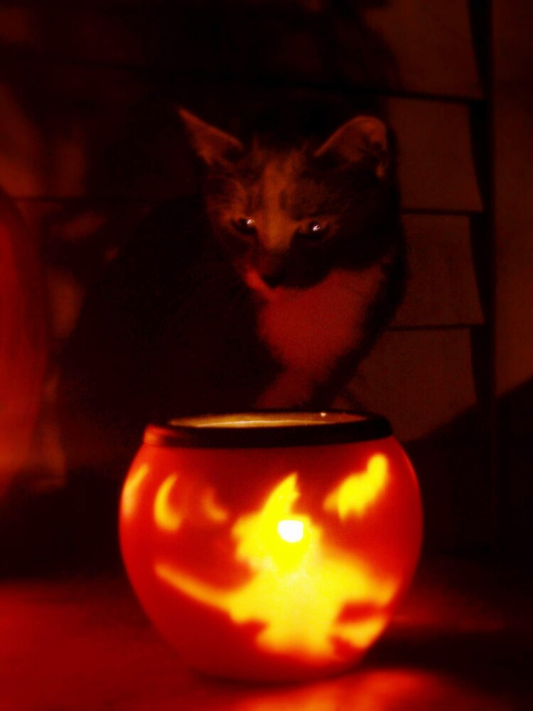 The Witches cat by babyangel