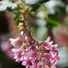 Beautiful Small Pink Flowers by Joy Watson