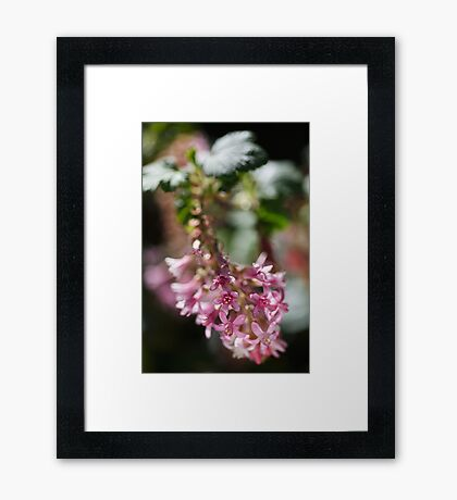 Beautiful Small Pink Flowers Framed Print