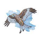 Red kite in flight by pokegirl93