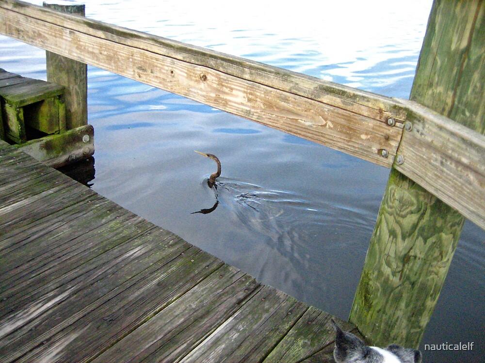Third Anhinga Swimming In by nauticalelf