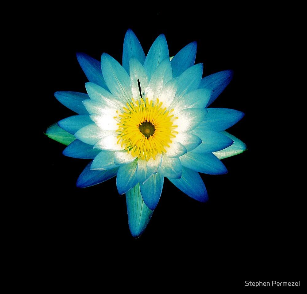 Blue Lotus by Stephen Permezel