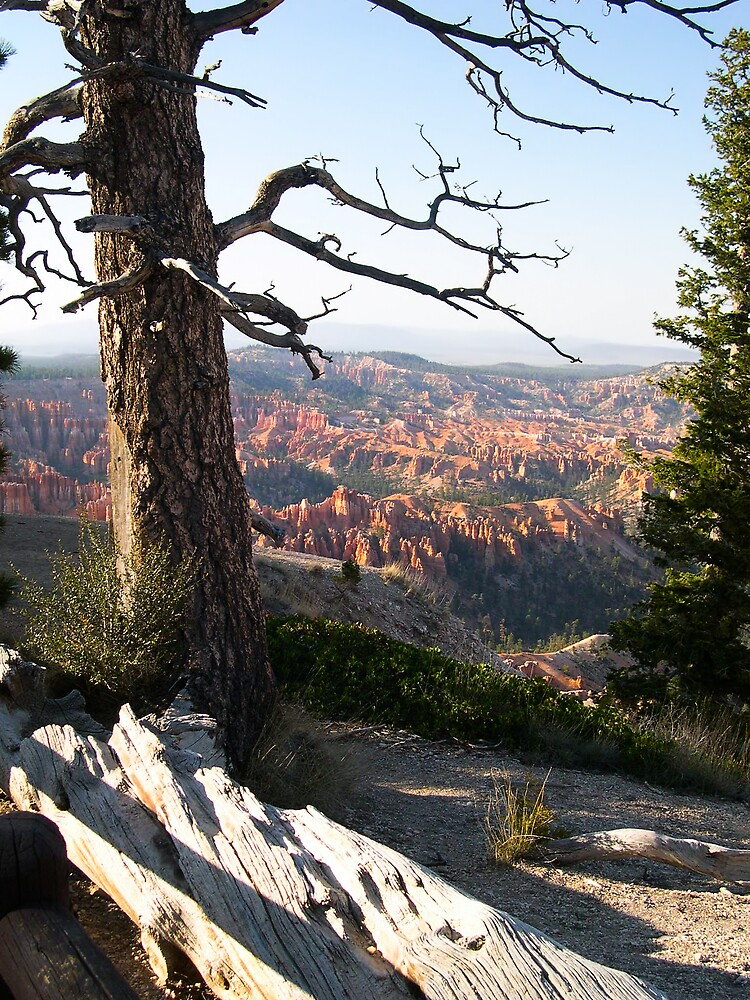 Rim of Bryce Canyon by Linda J Armstrong