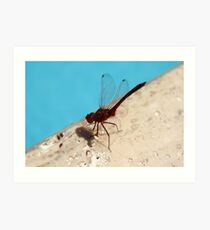 Dragonfly near the pool Art Print