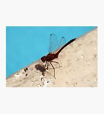 Dragonfly near the pool Photographic Print