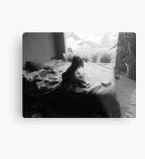 Willow on bed Metal Print