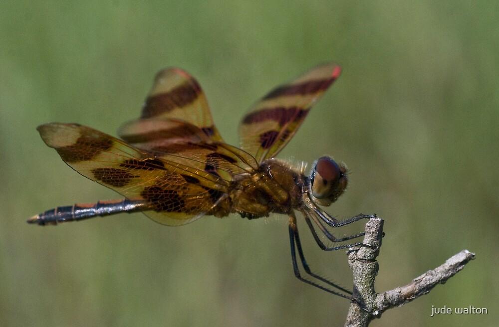 dragonfly 5 by jude walton