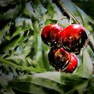 Some cherries by Kurt  Tutschek