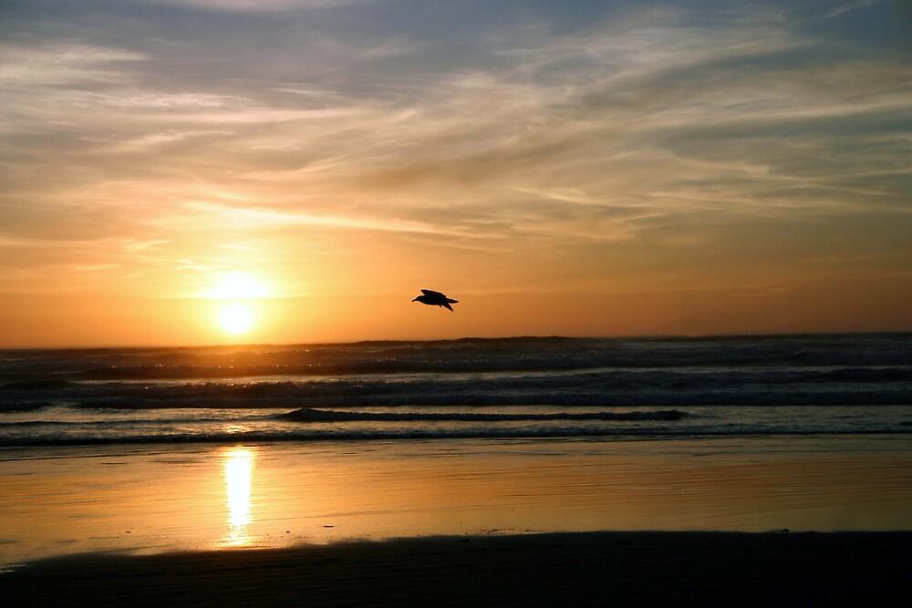 Gliding through the sunset by PhotosbyTerrell