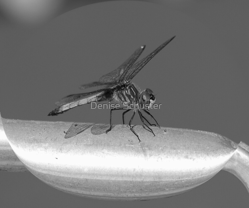 Bug - black & White by Denise Wolff