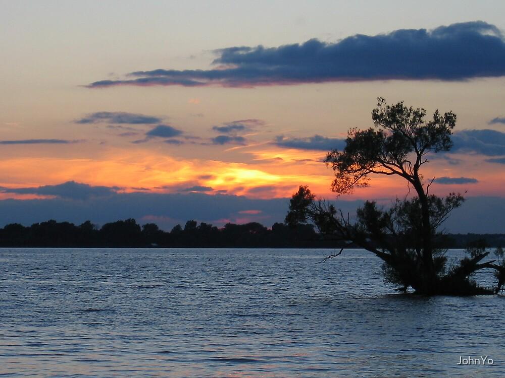 Sunset tree by JohnYo