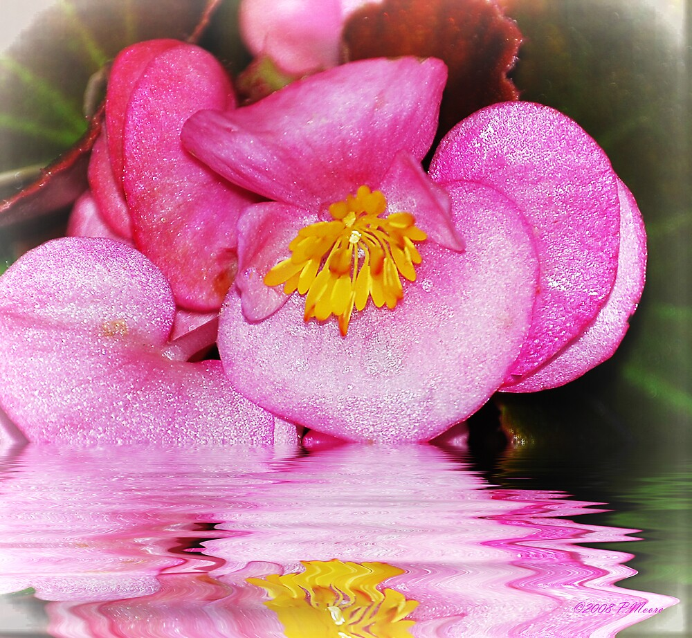 Pretty in Pink 2 by Pat Moore