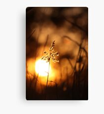 reed Canvas Print