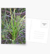 Springing Postcards