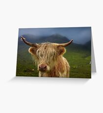 Highland Cow. Sconser. Isle of Skye. Scotland. Greeting Card