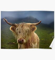 Highland Cow. Sconser. Isle of Skye. Scotland. Poster