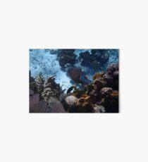 Cuba Kuba Playa Giron Fisch Fish Korallen Corals Art Board