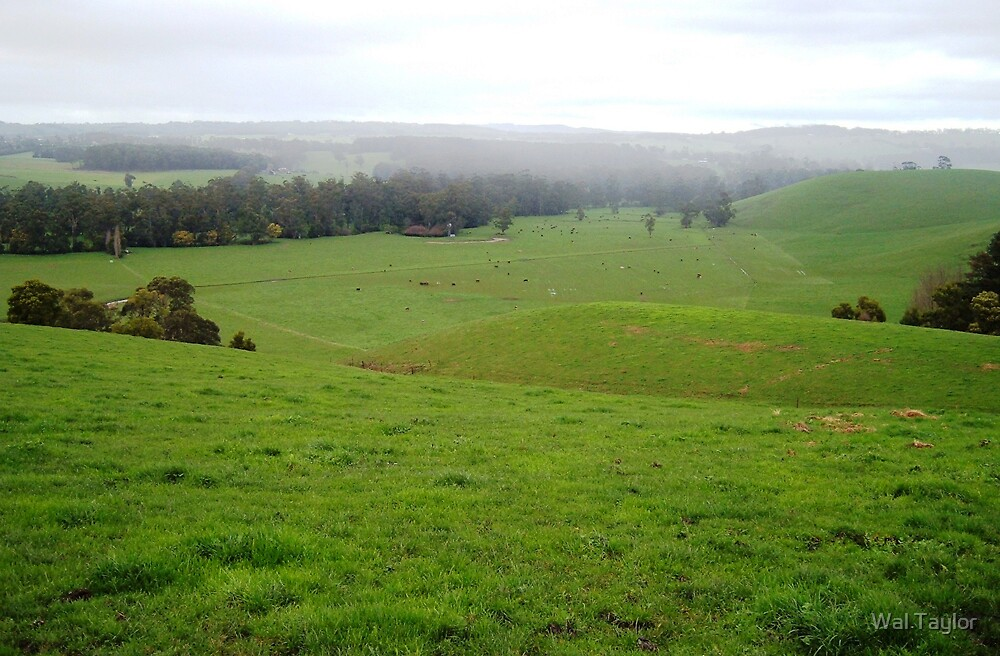 The Rolling Hills by Wal Taylor