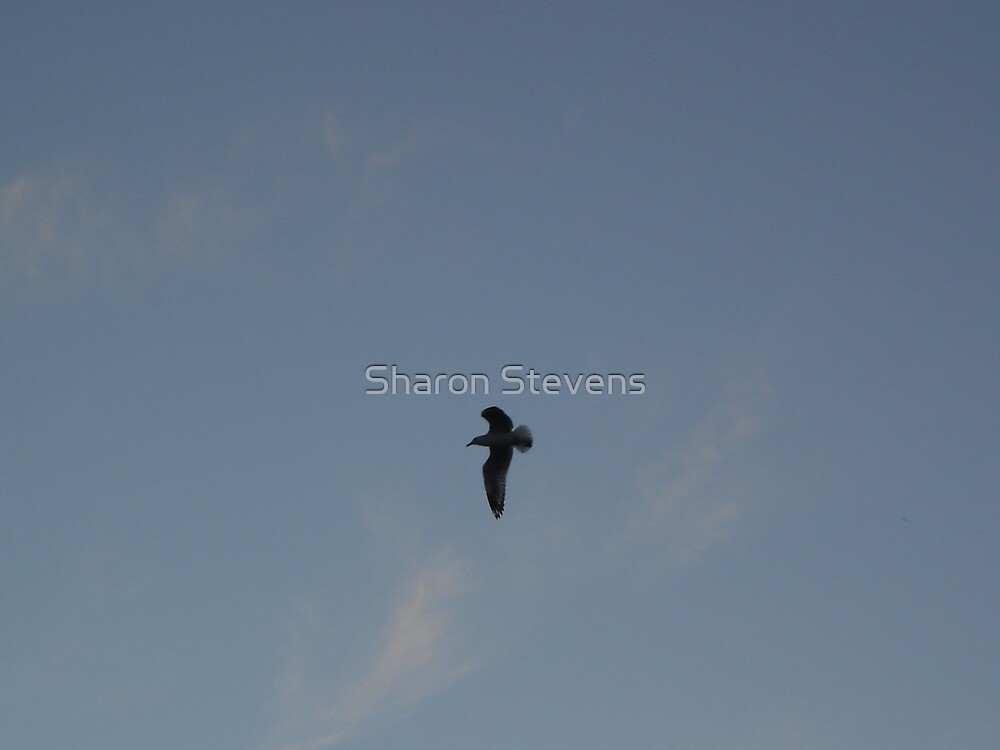 flying Solo by Sharon Stevens