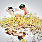Duck out of water by ♥⊱ B. Randi Bailey