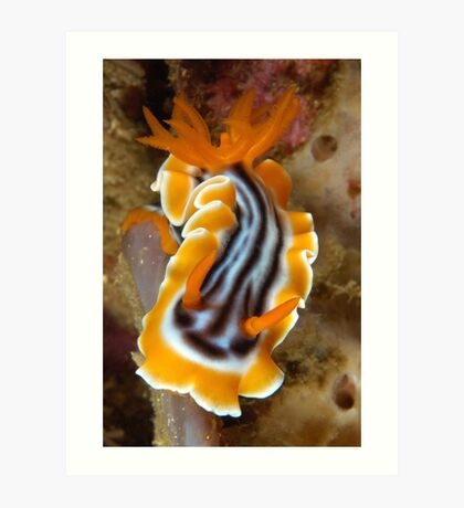 Nudi Night Art Print