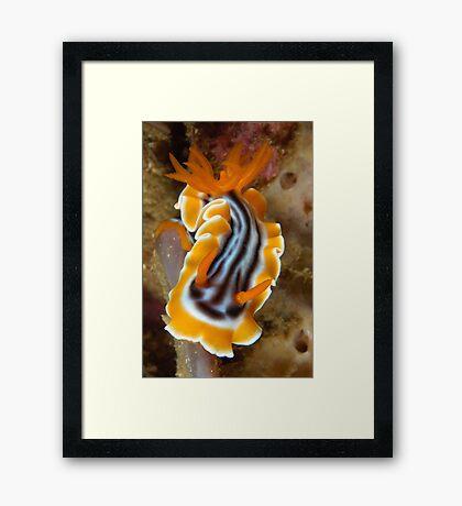 Nudi Night Framed Print