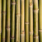 Bamboo by VanOostrum
