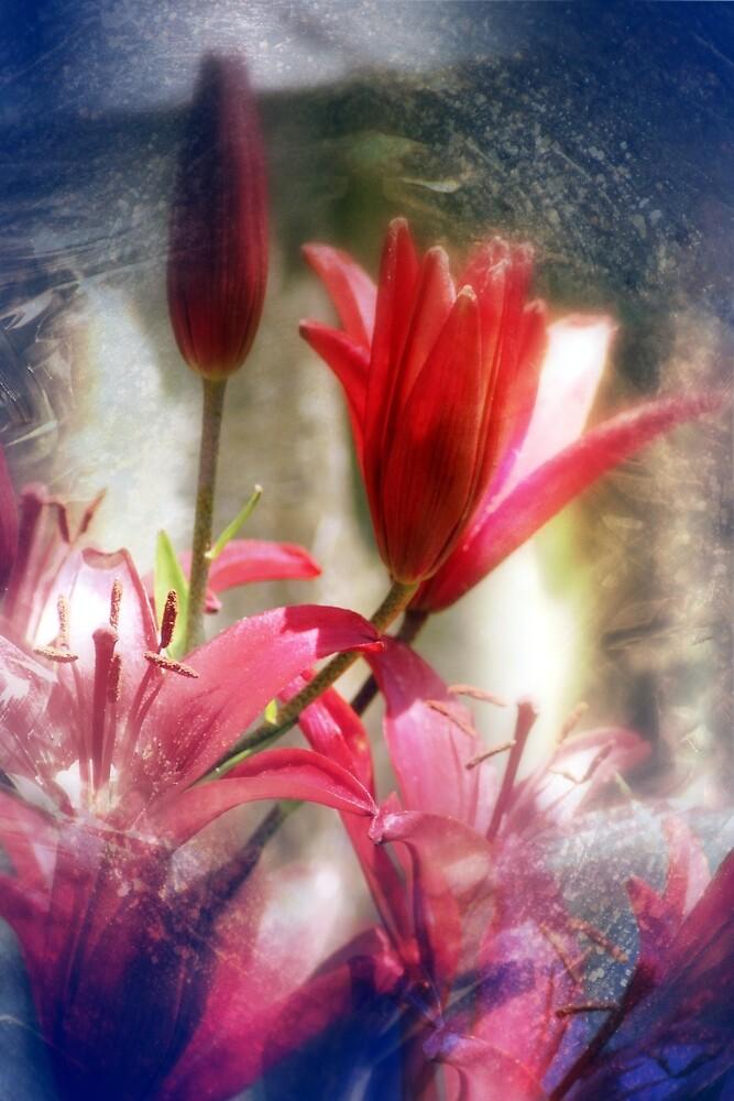 red lilies by Dawna Morton