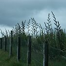 Fence by lemontree