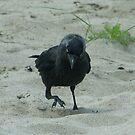 Raven by lemontree