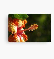 Flowers: Hibiscus Canvas Print