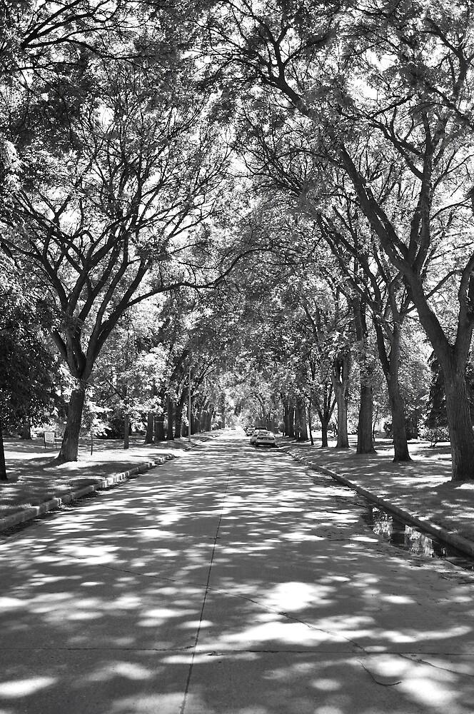 Urban Forest  by Geoffrey