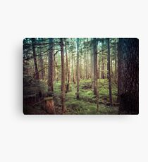Forest Trees - Tree Woods Green Nature Outdoor Adventure Canvas Print