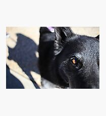 Picture of a Dog Photographic Print